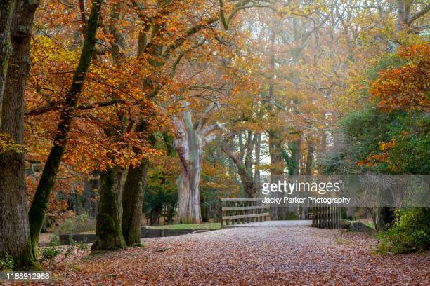 autumn colours in the new forest national park, hampshire, england, uk - autumn stock pictures, royalty-free photos & images