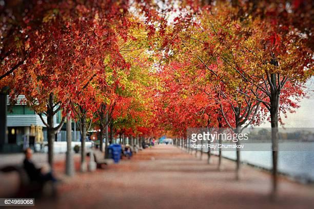 Autumn Colours of Maple Alley on Sugar beach