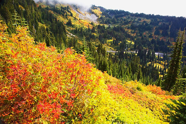 Autumn Colours On Mount Rainier, In Mt. Rainier National Park Wall Art