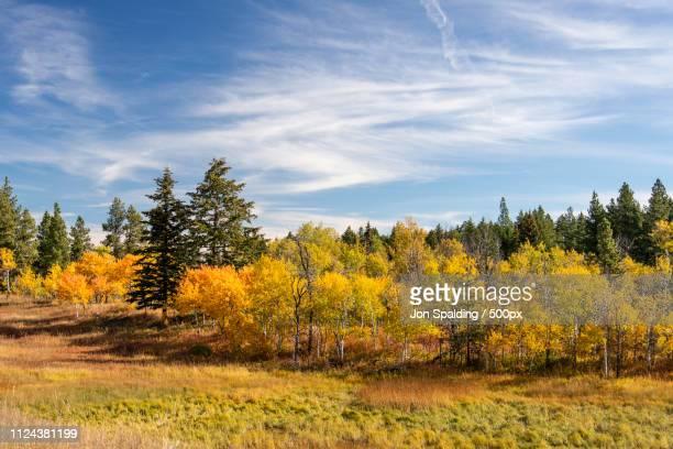 Autumn Colours On Range Lands