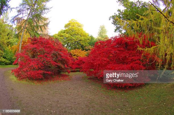 autumn colours - tetbury stock pictures, royalty-free photos & images