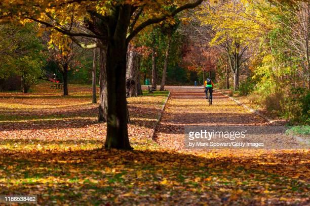 autumn colours - オンタリオ州 ロンドン ストックフォトと画像