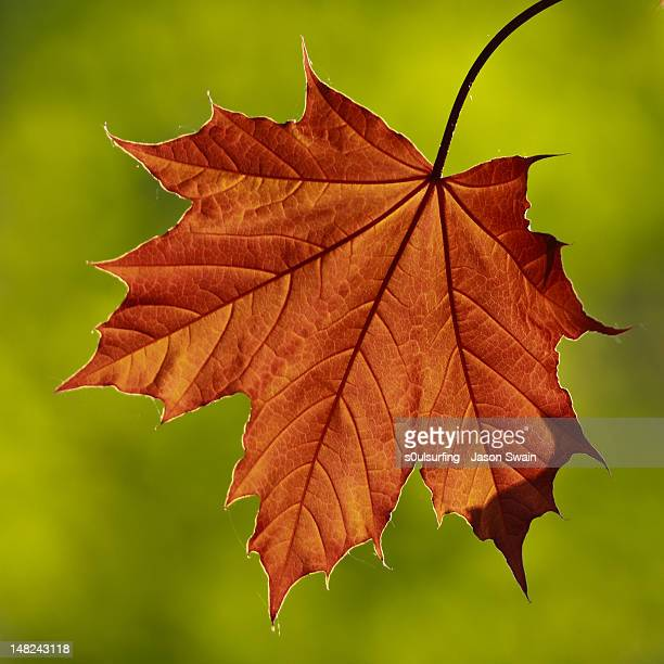 autumn colours - s0ulsurfing stock pictures, royalty-free photos & images
