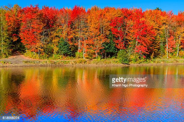 autumn colours - khanh ngo stock pictures, royalty-free photos & images