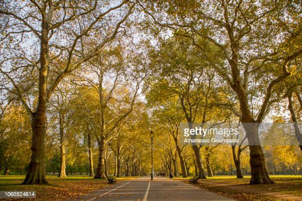 Autumn colours trees and leaves In Hyde Park on November 02 2018 in London England Great number of trees shedding their Autumn leaves