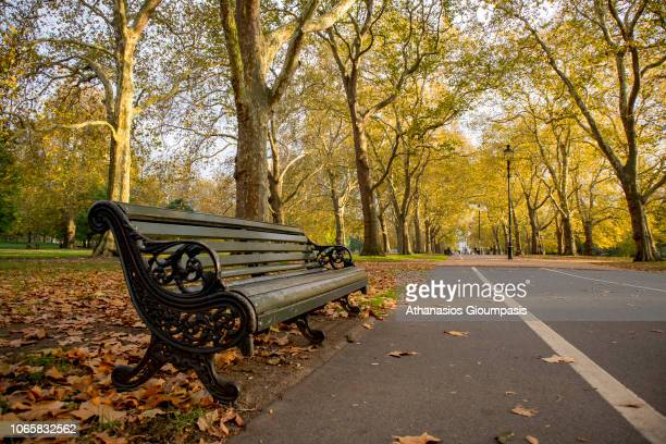 Autumn colours trees and leaves In Hyde Park on November 05 2018 in London England Great number of trees shedding their Autumn leaves