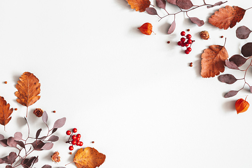 Autumn composition. Physalis flowers, eucalyptus leaves, rowan berries on gray background. Autumn, fall, thanksgiving day concept. Flat lay, top view, copy space 1170936915