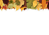 Autumn composition with leaves on white background and empty space for text