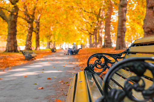 Autumn concept, benches on an avenue lined with trees in Green Park 867743006