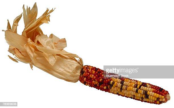 autumn corn - indian corn stock photos and pictures