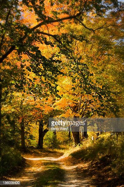 autumn country road - georgia country stock pictures, royalty-free photos & images