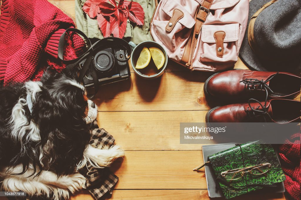 autumn cozy flat lay with sweater, shoes, vintage camera, backpack and spaniel dog with empty scape. : Stock Photo