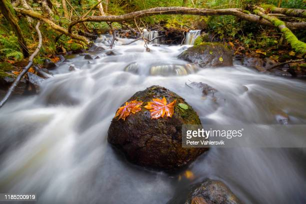 autumn creek - running water stock pictures, royalty-free photos & images