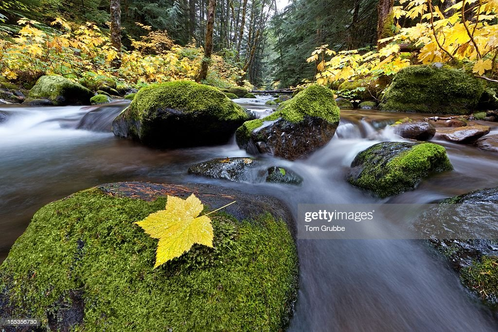 Autumn creek : Stock Photo