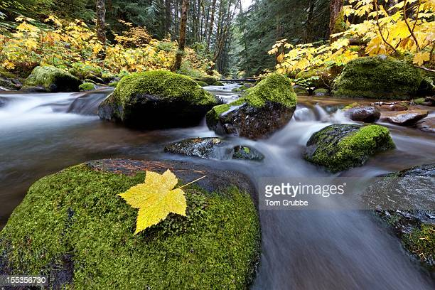 autumn creek - tom grubbe stock pictures, royalty-free photos & images