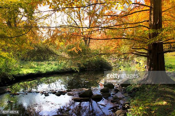 autumn creek with fall colors and reflections - kalamazoo stock pictures, royalty-free photos & images