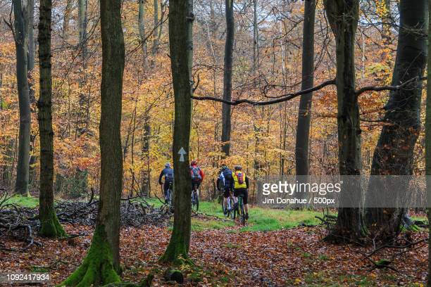 autumn cycling, near nettlbed - jim donahue stock pictures, royalty-free photos & images