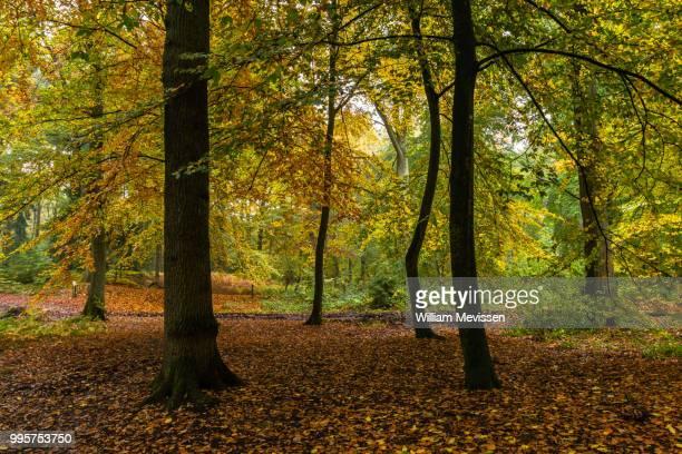 autumn dance - william mevissen fotografías e imágenes de stock
