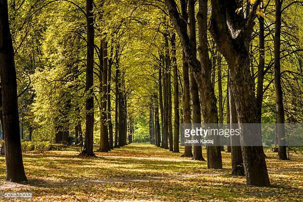 autumn day in park saski in warsaw - マゾフシェ県 ストックフォトと画像