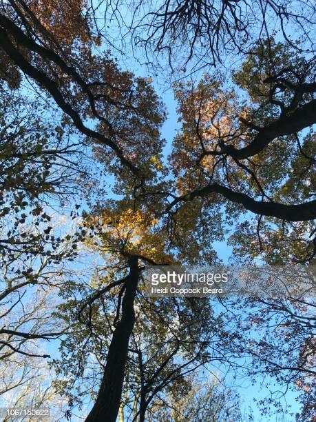 autumn day - heidi coppock beard - fotografias e filmes do acervo