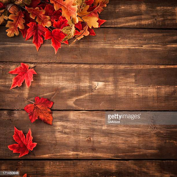 autumn decoration background with leafs - november background stock photos and pictures