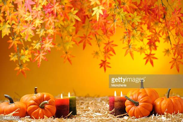 autumn decoration - november background stock photos and pictures
