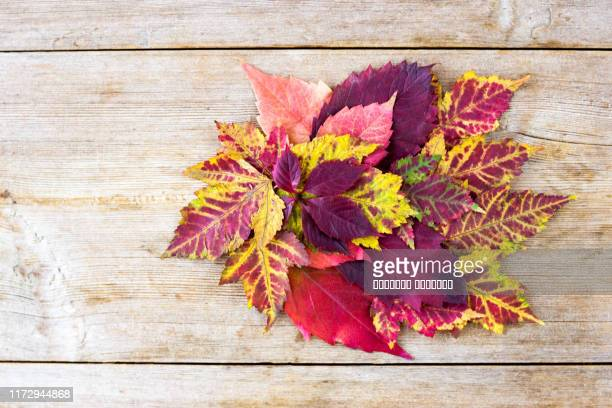 autumn decoration red, orange, yellow leaves on a wooden background. fall, back to school concept - rust colored stock pictures, royalty-free photos & images