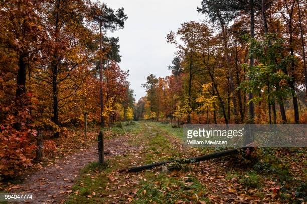 autumn delight - william mevissen - fotografias e filmes do acervo