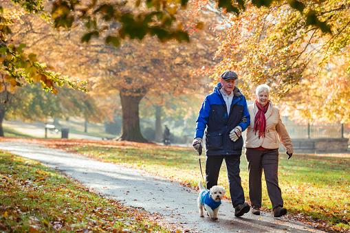 Autumn Dog Walk 1148020444