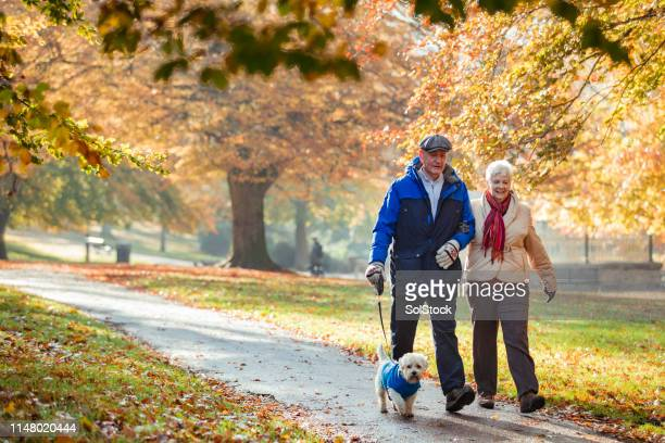 autumn dog walk - senior adult stock pictures, royalty-free photos & images