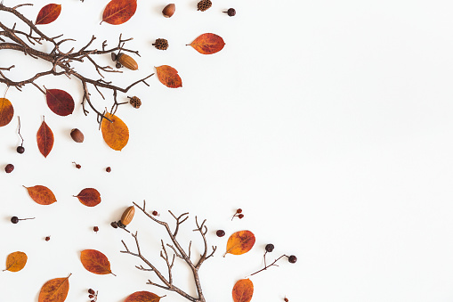 Autumn dried leaves on white background. Flat lay, top view 997118504