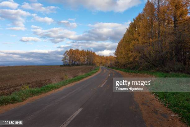 autumn drive - biei town stock pictures, royalty-free photos & images