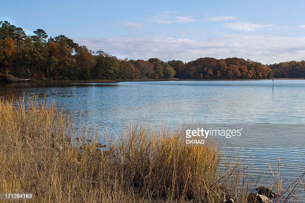 autumn estuary scene along the chesapeake bay with trees - chesapeake bay stock pictures, royalty-free photos & images