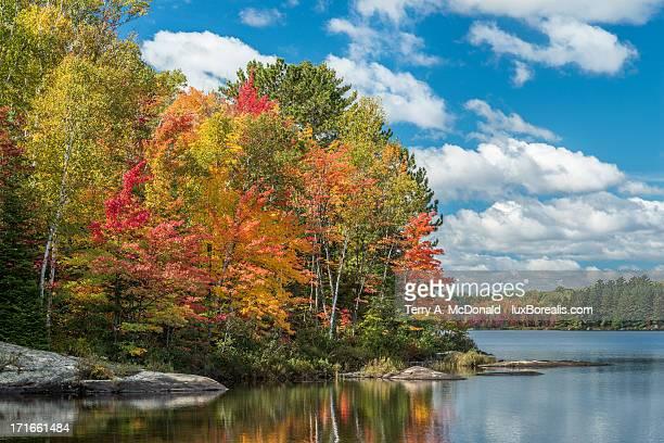 Autumn Explosion, Bark Lake
