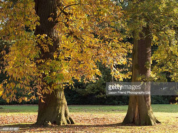 Autumn / Fall colours in Clumber Park
