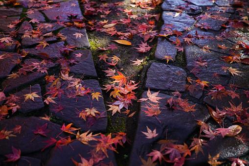 Autumn falling leaves - gettyimageskorea