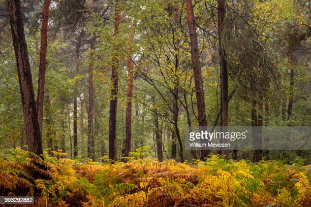 autumn fern - william mevissen stock pictures, royalty-free photos & images