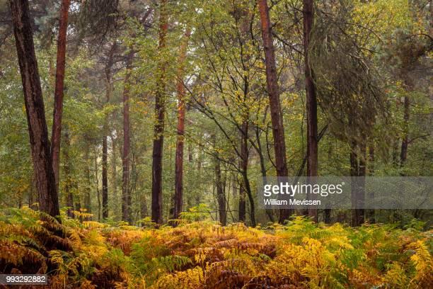 autumn fern - william mevissen - fotografias e filmes do acervo