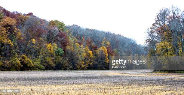 Autumn - Field and a colorful forest