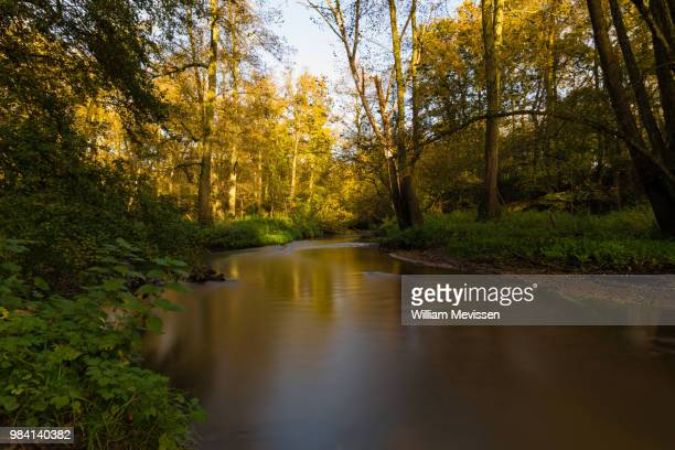 autumn flow - william mevissen stockfoto's en -beelden