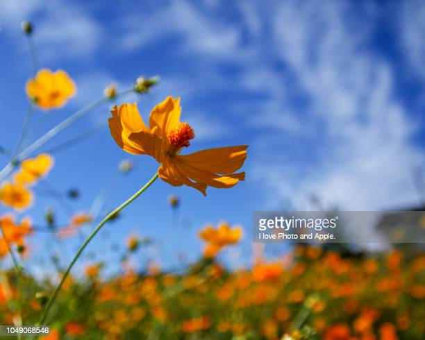autumn flowers - september stock pictures, royalty-free photos & images