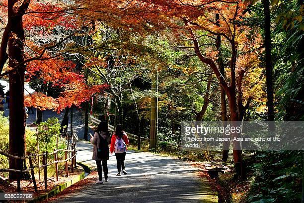 Autumn Foliage at Bishamondo Temple, Kyoto