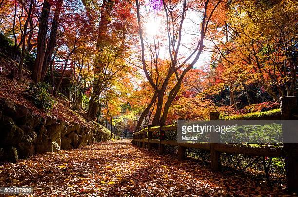 Autumn foliage at Kitano Tenmangu shrine