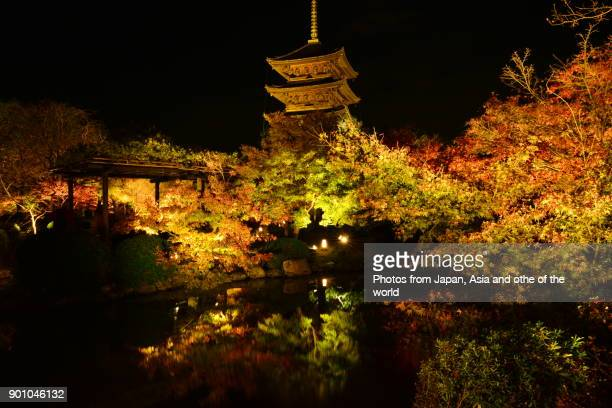 Autumn Foliage at Toji Temple Illuminated, Kyoto