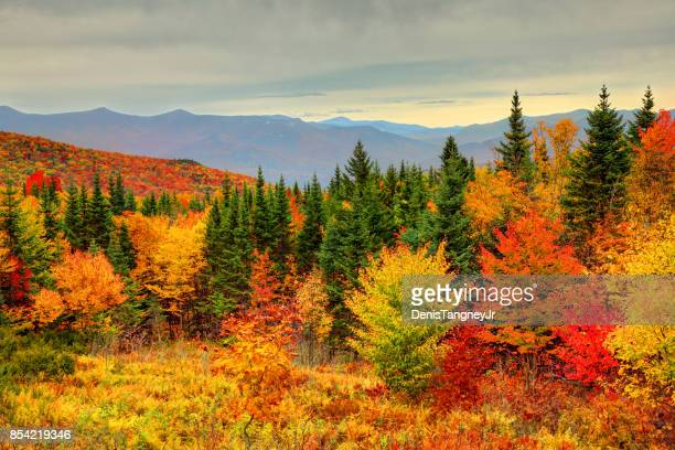 autumn foliage in the white mountains of new hampshire - autumn leaf color stock pictures, royalty-free photos & images