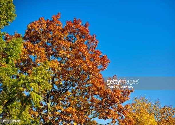 autumn foliage - collin key stock-fotos und bilder
