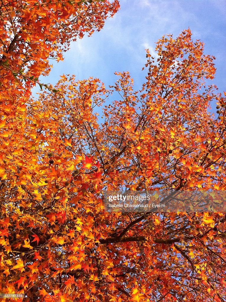 Autumn Foliage : Foto stock