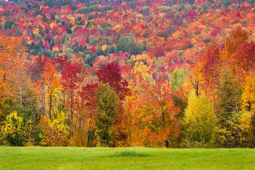 Autumn foliage - gettyimageskorea