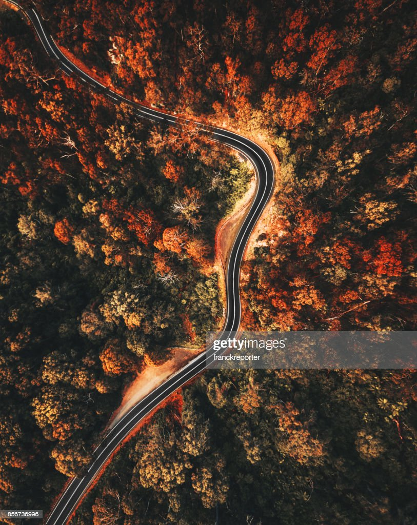 autumn forest aerial view in australia : Stock Photo