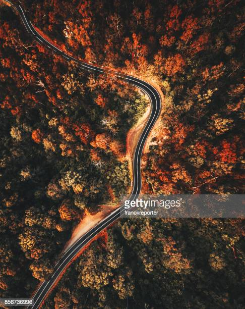 autumn forest aerial view in australia